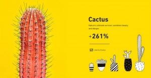 Pazarlama Tasarım Trendleri kaktüs